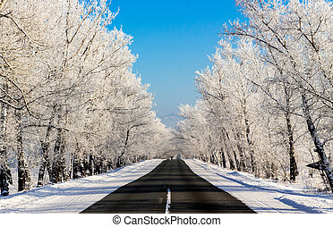 Snowy winter country road in the forest on sunny day