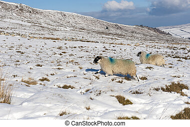 Snowy winter countryside landscape scene