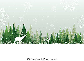 Snowy winter forest background - Green and white winter...