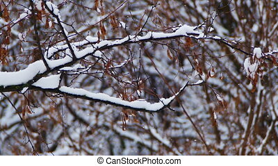 Snowy Winter Forest - Winter forest with snowy tree. Snow...