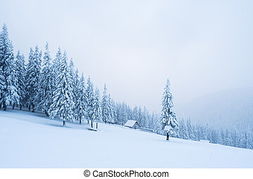 Snowy winter in a mountain forest