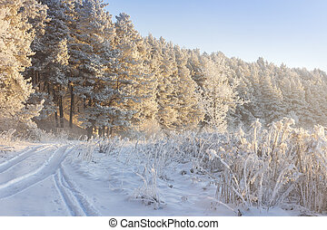 Snowy winter landscape. Frosty nature. Cold hoarfrost on trees. Christmas background. Winter clear morning in sunlight.