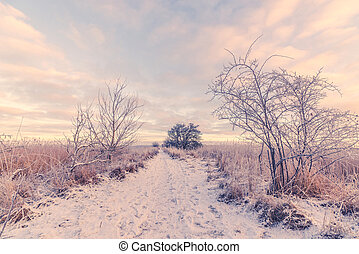 Snowy winter landscape with a path