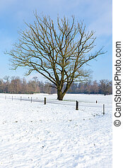 Snowy winter landscape with bare tree and blue sky -...