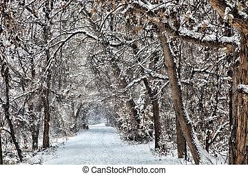 Snowy Winter Path