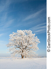 Snowy winterday