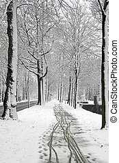 Snowy woods in the Netherlands
