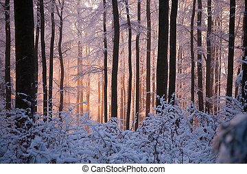 Sun's rays penetrate through the snowy woods.