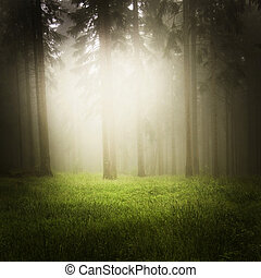 soñador, bosque