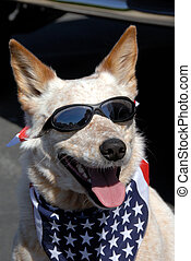So Cool! - Pound Rescued All American Dog Wearing American...