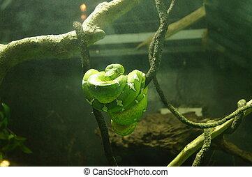 Soaking Up The Sun - A green snake enjoying the sun.