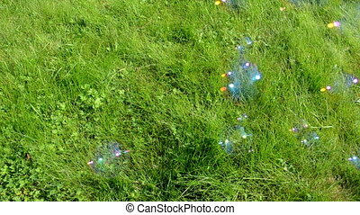 soap bubbles with sun reflections flying on background of green meadow grass.