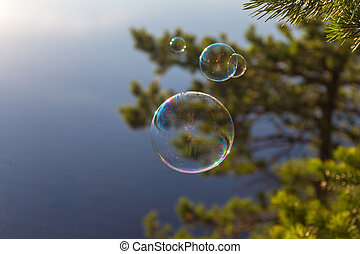 soap bubbles and pine branches