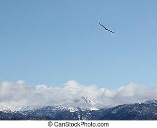Soaring bald eagle - A lone bald eagle soaring over the...