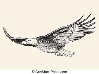 Soaring Eagle - Sketch illustration of a soaring eagle