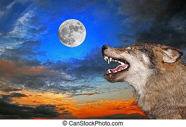 sob, lobo, lua