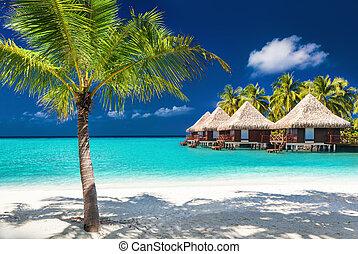 sobre, água, bungalows, ligado, um, ilha tropical, com, coqueiros, e, espantoso, praia