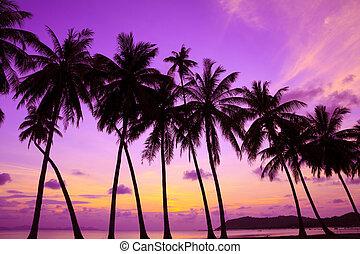 sobre, árvores, tropicais, palma, pôr do sol, mar, tailandia