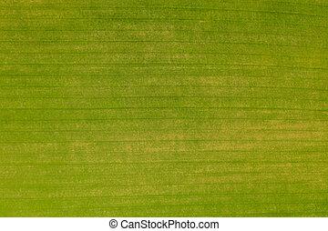 sobre, campo, verde, textura