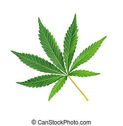 sobre, cannabis, isolado, fundo branco, folha, marijuana