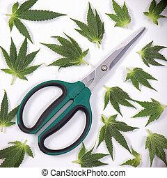 sobre, conceito, &, médico, -, marijuana, cannabis, tesouras, branca, folhas, aparando