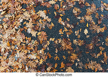 sobre, descomposición, hojas, mojado, vista, directamente, asfalto