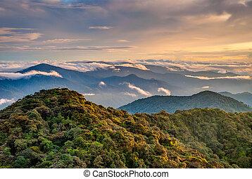 sobre, malásia, selva, cameron, altiplanos, amanhecer