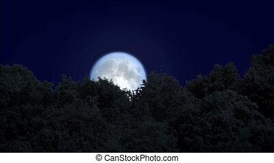 sobre, moonrise, floresta, amanhecer