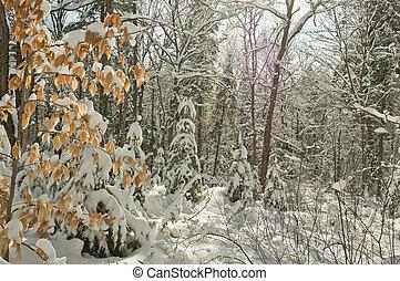 sobre, neve, árvores, natal