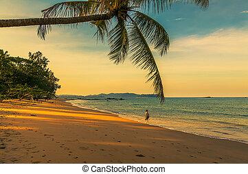 sobre, praia, amanhecer