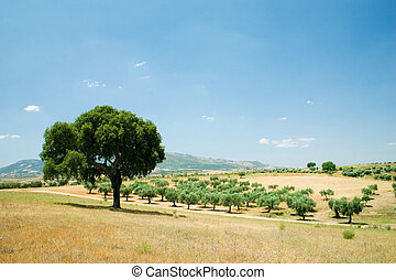 Sobreiro3 - Quercus suber in blue sky