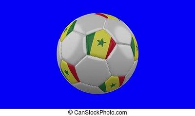 Soccer ball with Senegal flag on blue chroma key background, loop