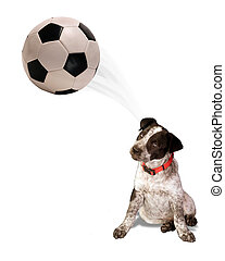 Soccer Dog.