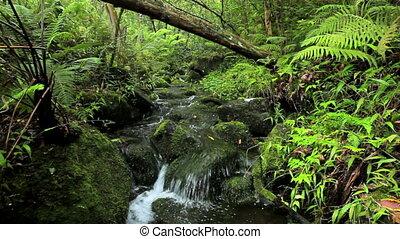 soczysty, dżungla, potok