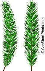 soczysty, evergreen, branch., świerk, zielone drzewo, jodła