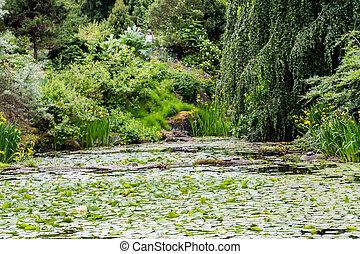 soczysty, lilie, zielony, ogród