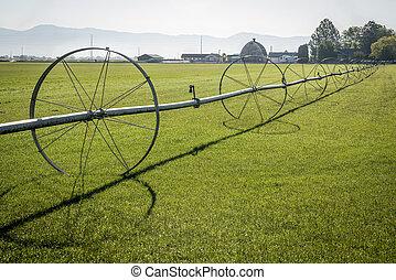 Sod field and irrigation sprinkler