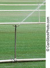 Sod Irrigation