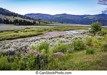 Soda Butte Creek is a major tributary of the Lamar River at Yellowstone National Park.
