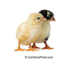soeurs, poulet