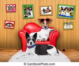 sofá, pareja, amor, perros