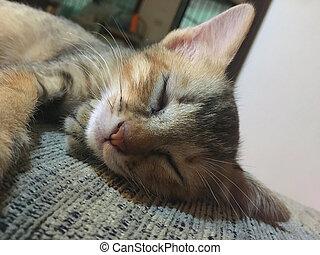 sofa, chat, tissu, dormir