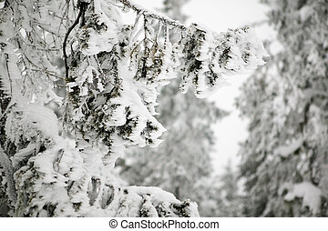 soffiato, dettaglio, vento, neve
