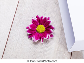 Soft abstract image of vivid flower