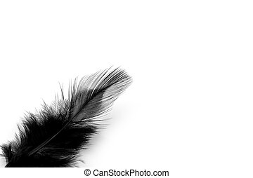 Soft black feather isolated on white