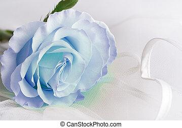 Soft blu color Rose on a light background