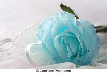 Soft blue color Rose on a light background