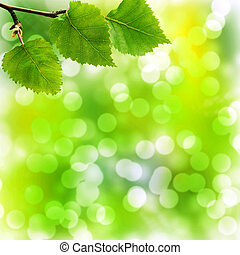 Soft Bokeh Background with Birch Leaves