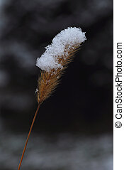 plant with snow