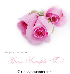 soft card with roses